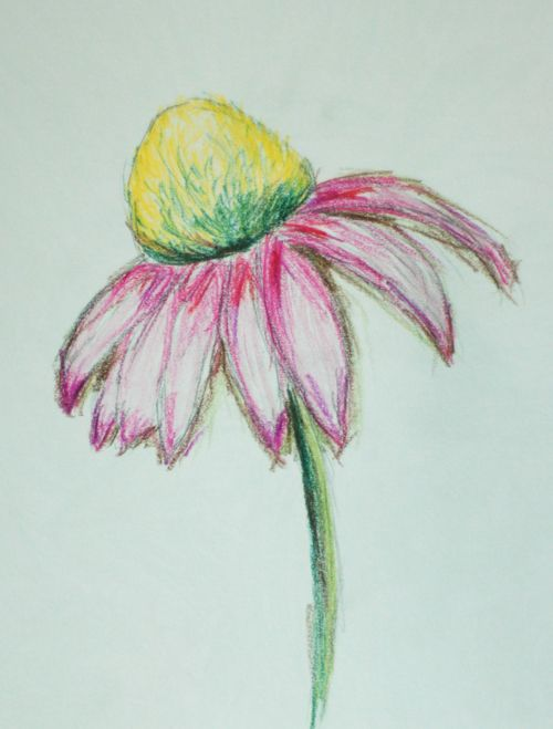 Crayon drawing of a cone flower